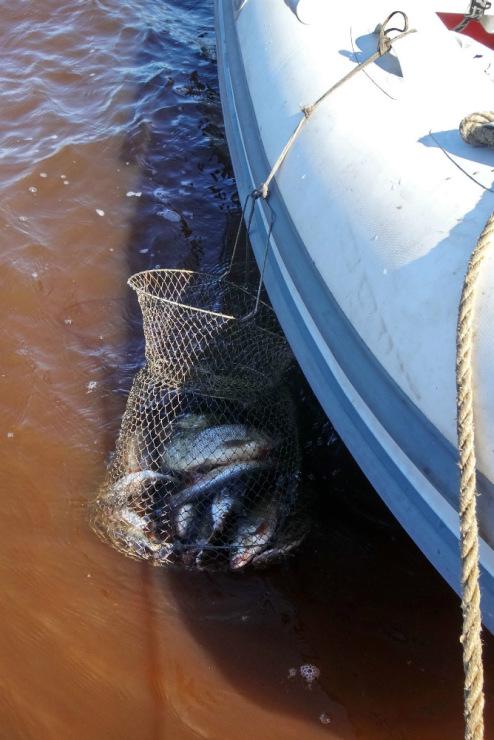 рыбалка на сетку море