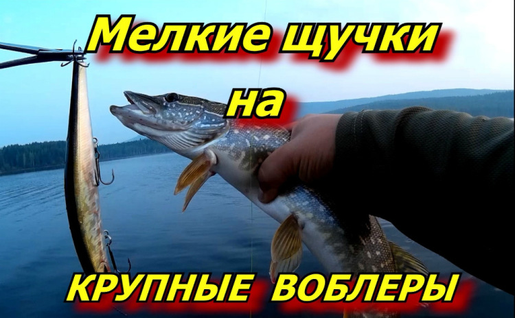 твич ловля рыбы что это